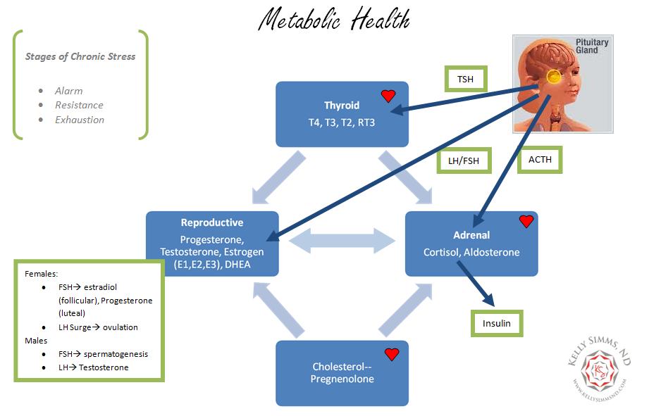Hormone_and_Metablic_Health
